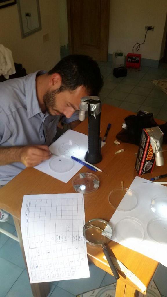 Indentificazione al microscopio delle zanzare